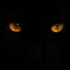 othercat: (cat eyes)