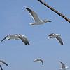 asakiyume: (birds to watch over you)