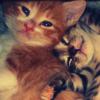 jettakd: (2 kittens)