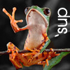 grundyscribbling: tree frog with one hand raised, caption: 'sup ('sup)
