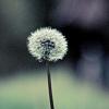 klb: (Make a wish)