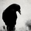 tigerundercover: (AU - poe's raven - emo)