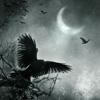 tigerundercover: (AU - poe' raven - flight)