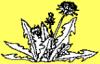 thnidu: a dandelion plant, the symbol of filk (filk)