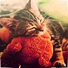 ilaysio: (kitty: snuggle time)