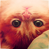 ilaysio: (kitty: upside down)
