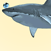 makeste: [a shark with a beach ball on its nose] (Status: nerd)