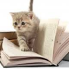 quantumcupcakes: (Cats & Books)