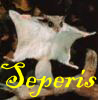 seperis: (flying squirrel 1)