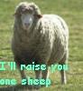 seperis: (sheep)