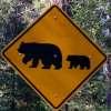 travelswithkuma: Bear Crossing Sign on CA-49 (Bear Crossing)