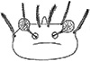 trombicula: (Sauracarella)