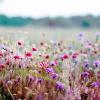 starrylites: (wildflowers)