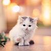 defiant: (Stock - White Kitten)