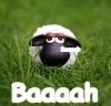 alexcat: (Baaah)