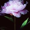 rainy_fantasy: (misc - flower in the dark)