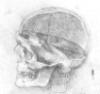 selkie3: (Medical Skull)