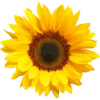 jadey36: (sunflower)