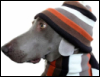 lesli: Dog wearing scarf (Dog in scarf hat)