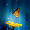 ext_1571046: ([Misc] Butterfly)
