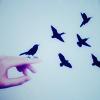 ext_1571046: ([Misc] Birds)