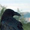 snowwhitecrow: ([Crow] Keeping Watch)