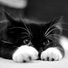 slytherisa: (Eddie kitty)