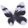 mindset: butterfly (butterfly)