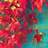 elderberrywine: (red and green leaves)