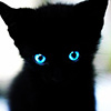 reijamira: ([Stock] Kitten black) (Default)