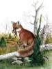 rainygrape: (Orange fox)