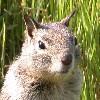 moodyduck: (squirrel)