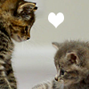 ext_1720: two kittens with a heart between them (joss - spike long day)