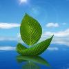 bestoloch: (leaf)