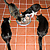 feng_shui_house: pic of cats lined up in M shape (Cat m)
