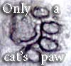 feng_shui_house: Cat pawprint in cement (Catpaw)