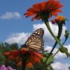 prosodic: (monarch)