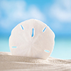 yhlee: sand dollar against a blue sky and seas (sand dollar)