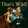 feng_shui_house: Tiger text That's wild (Tiger Wild)