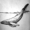 vulpines: a black and white tattoo of a whale with its tail breaking the water (two more miracles)