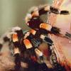 merrysheep: (spider legs)