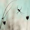merrysheep: (little spider)
