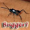 feng_shui_house: Little bug on my hand text Bugger (Bugger)