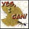 feng_shui_house: Ant carrying fish food flake text Yes I can (Can Do it)