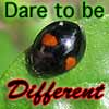 feng_shui_house: Black ladybug with red spots text Dare to be different (Ladybug different)