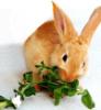 falfa_m: (alfalfa, bunny)