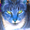feng_shui_house: Blue tabby cat (Cat Blue)