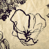 dasyatidae: (Default)