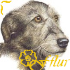 apostrophewitch: (Fflur- Tansy's wolfhound)
