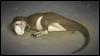 dormant_dragon: Sleepy Stan from 'All Yesterdays' (Default)